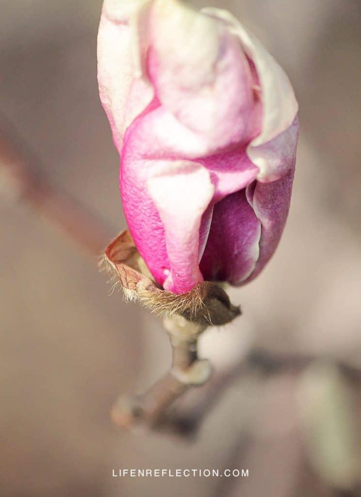 Spring Unfolding