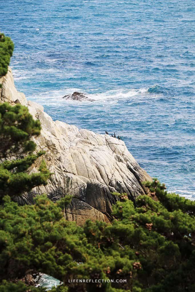 On the Coast of Big Sur