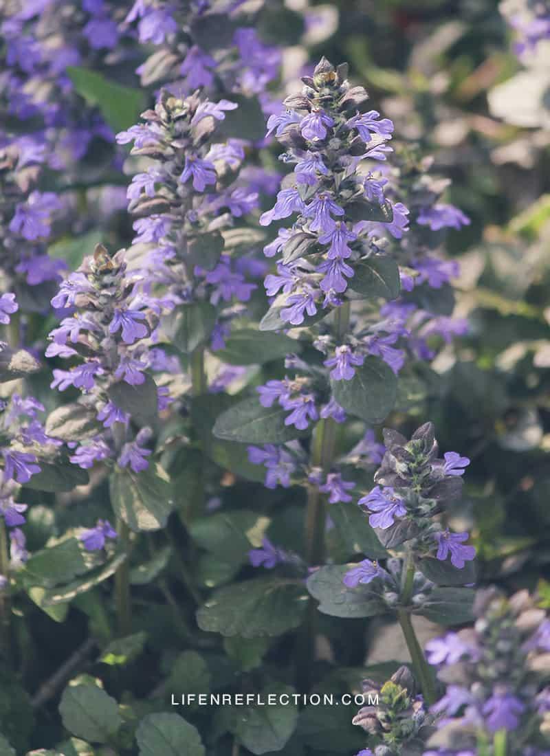In the Garden Summer Saliva
