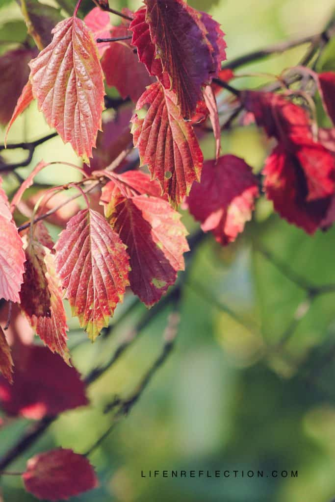 Autumn Uncovered